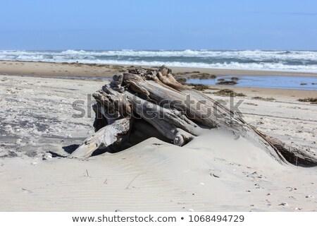 Areia troncos textura madeira natureza branco Foto stock © Nelosa