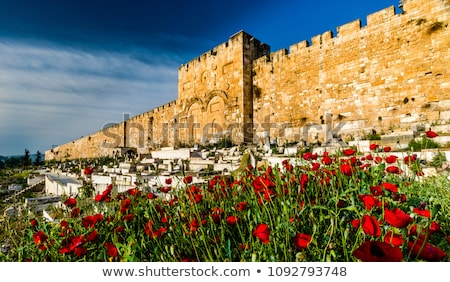 Golden gate Jerusalém Israel velho cidade inverno Foto stock © AndreyKr