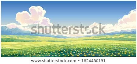 Glade paardebloemen zonnige weer bloem gras Stockfoto © dashapetrenko