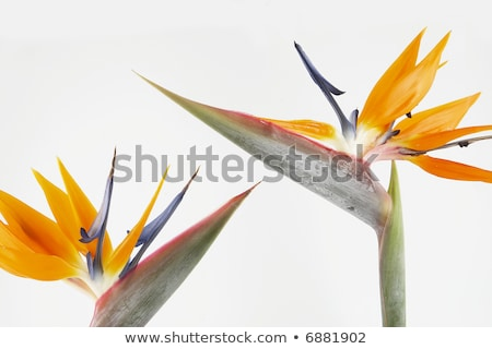 Stock photo: Botanical Garden And Birds III