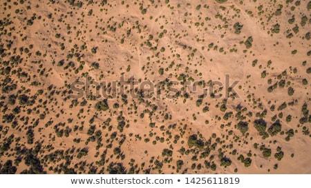 Desert Vegetation Stock photo © kitch