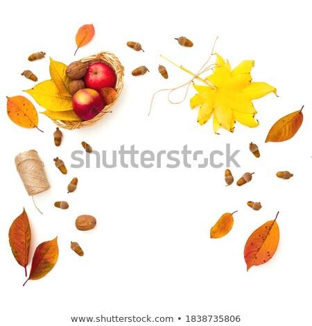 Elma yaprak ince dizi asılı Stok fotoğraf © EFischen