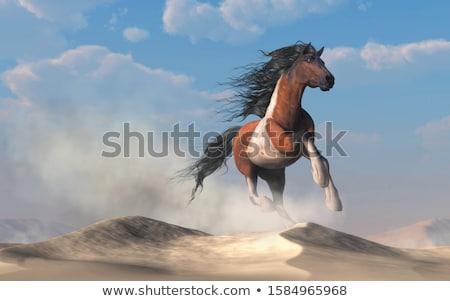 horses behind the dunes stock photo © ivonnewierink