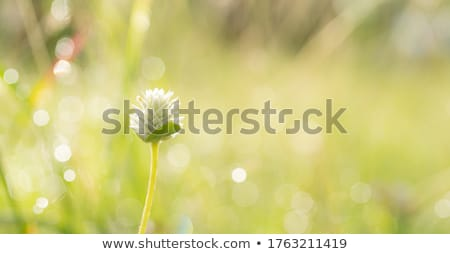 Soothing Background Stock photo © kentoh
