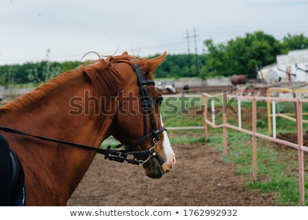 Legs of woman and horse walking together on ranch Stock photo © deandrobot