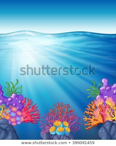 сцена коралловый риф подводного иллюстрация морем фон Сток-фото © bluering