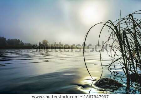 Beautiful landscape with dawn mist and morning dew selective foc Stock photo © TasiPas