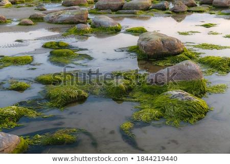 Kövek fedett hínár tengerpart tájkép háttér Stock fotó © OleksandrO