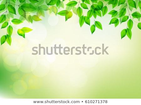 Cal hojas árbol aislado blanco jardín Foto stock © gitusik