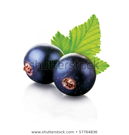 Two black currants with leaf Stock photo © Gbuglok
