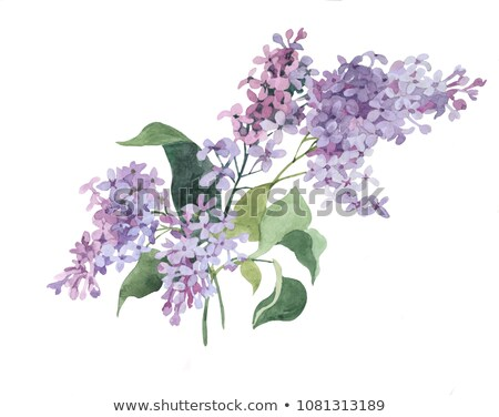 Lilac flowers on green Stock photo © neirfy