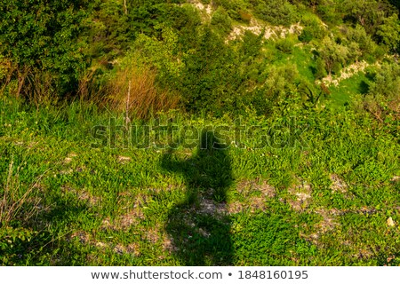 Woman outdoors on grass showing biceps. Stock photo © deandrobot