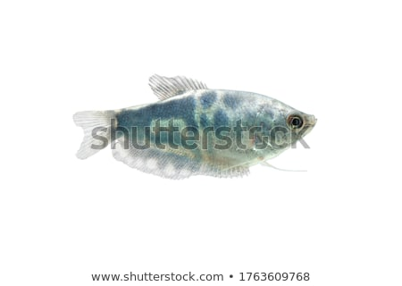 Stock photo: pretty fish
