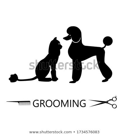 Kutya fodrász bolt illusztráció áll divat Stock fotó © lenm