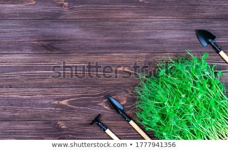 Mikro pázsit zöldborsó bézs egészséges bioélelmiszer Stock fotó © olira