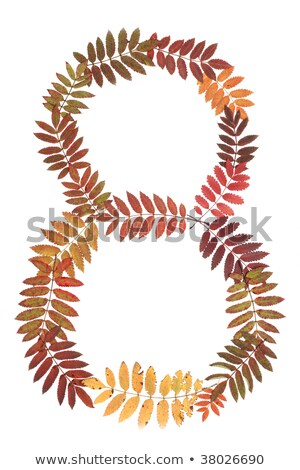 Numeral eight 8 put from autumn sheet stock photo © RuslanOmega