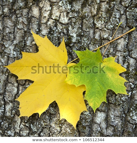 Pair with maple leaves in autumn wood Stock photo © Paha_L
