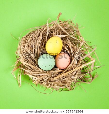 colore · easter · eggs · basket · erba · verde · Pasqua · primavera - foto d'archivio © elly_l