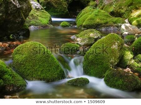 Dere yosun taşlar yaprak dağ yaz Stok fotoğraf © goce