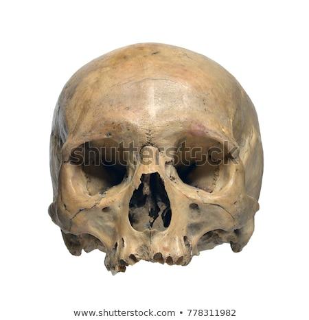 Old Skull Stock photo © ArenaCreative