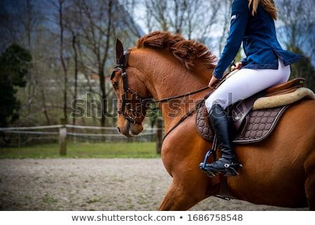верхом женщину лет джинсов животные Сток-фото © phbcz