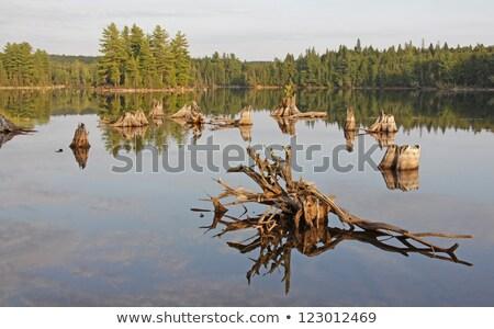 Ilha lago troncos morto parque Foto stock © ca2hill