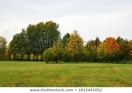 Yellow Leaves on Tree Stock photo © smithore