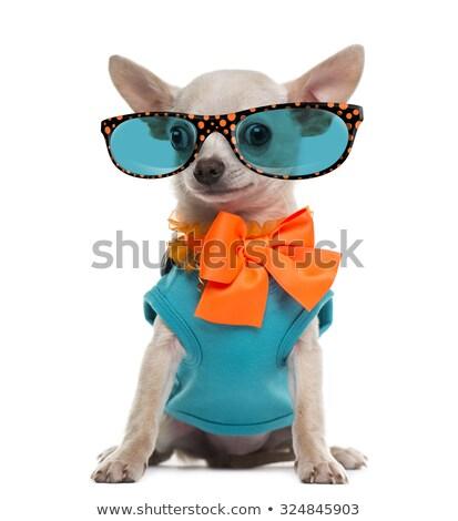 собака · кошки · костюм · такса - Сток-фото © elnur