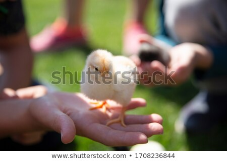 Feather in hands of the child Stock photo © dashapetrenko
