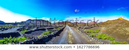 виноградник · природы · пейзаж · горные · автобус · красный - Сток-фото © adrenalina