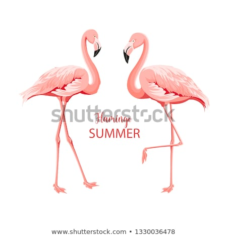 pembe · flamingo · hayvanat · bahçesi · bahar · turuncu · bacaklar - stok fotoğraf © alex_grichenko
