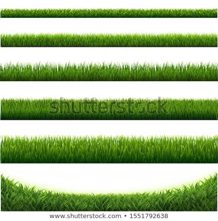 草 孤立した 白 春 抽象的な 夏 ストックフォト © natika