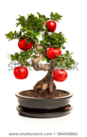 Apple tree bonsai background Stock photo © marimorena