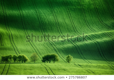 spring field, Southern Moravia, Czech Republic Stock photo © phbcz