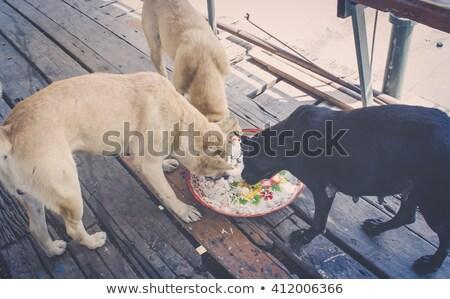 hond · leggen · trottoir · straat · triest · daklozen - stockfoto © juhku