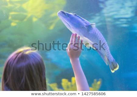 Moço túnel tanque olhando peixe aquário Foto stock © wavebreak_media