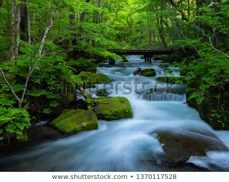 Waterval berg stream spatten water landschap Stockfoto © taviphoto