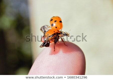 Elvesz el ujj katicabogár kert szépség Stock fotó © H2O