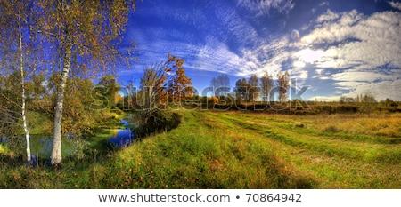 panorámakép · tájkép · sikátor · mezők · erdő · rossz - stock fotó © meinzahn