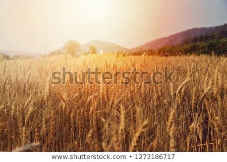かんがい · 公園 · 草 · 花壇 · 自然 · 夏 - ストックフォト © stevanovicigor