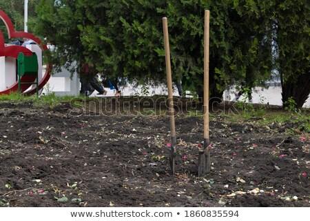 Dos espadas verde manejar ilustración blanco Foto stock © bluering