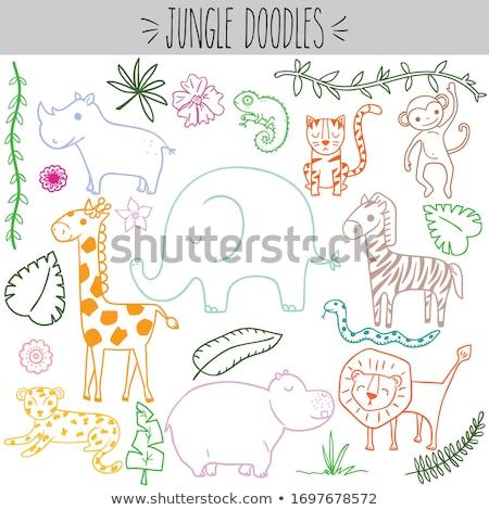Animal outline for monkey on vine Stock photo © colematt