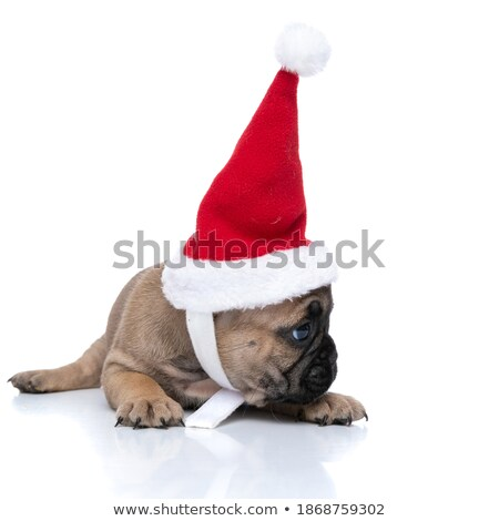 santa french bulldog lying and looking to side Stock photo © feedough