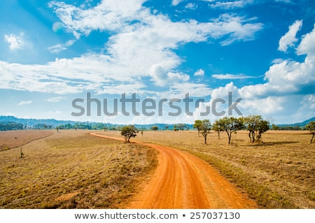 Estrada savana campo ilustração pôr do sol paisagem Foto stock © colematt