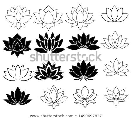Set of lotus flowers Stock photo © netkov1