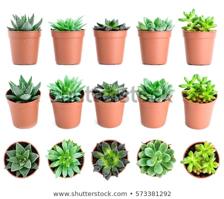 types of flowers in pots plants in containers stock photo © robuart