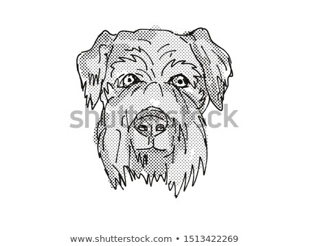 Terrier kutyafajta rajz retro rajz stílus Stock fotó © patrimonio