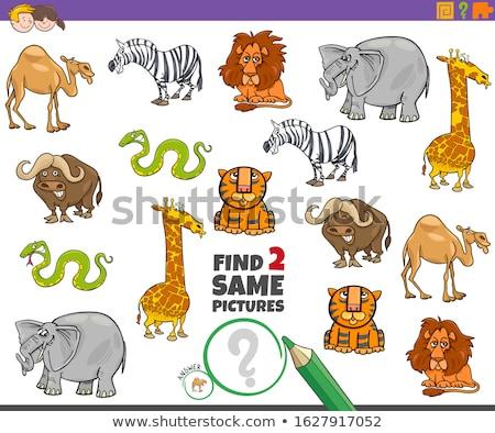 find two same wild animal characters task for kids Stock photo © izakowski
