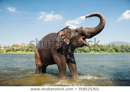 Elefanti elefante godere tutti i giorni bagno Foto d'archivio © joyr