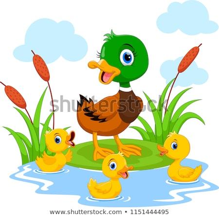 cute duck stock photo © indiwarm